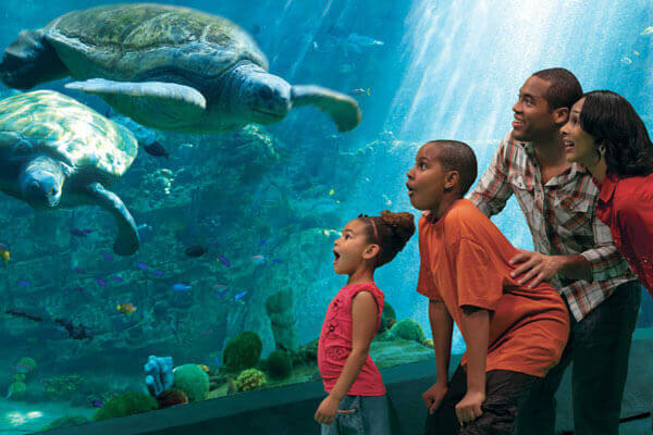 Save $20 on Single Day Admission to SeaWorld® Orlando